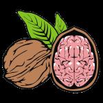 Mozkoořech