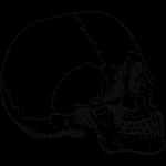 Lidská lebka